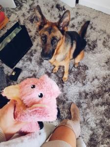 dog training with toys