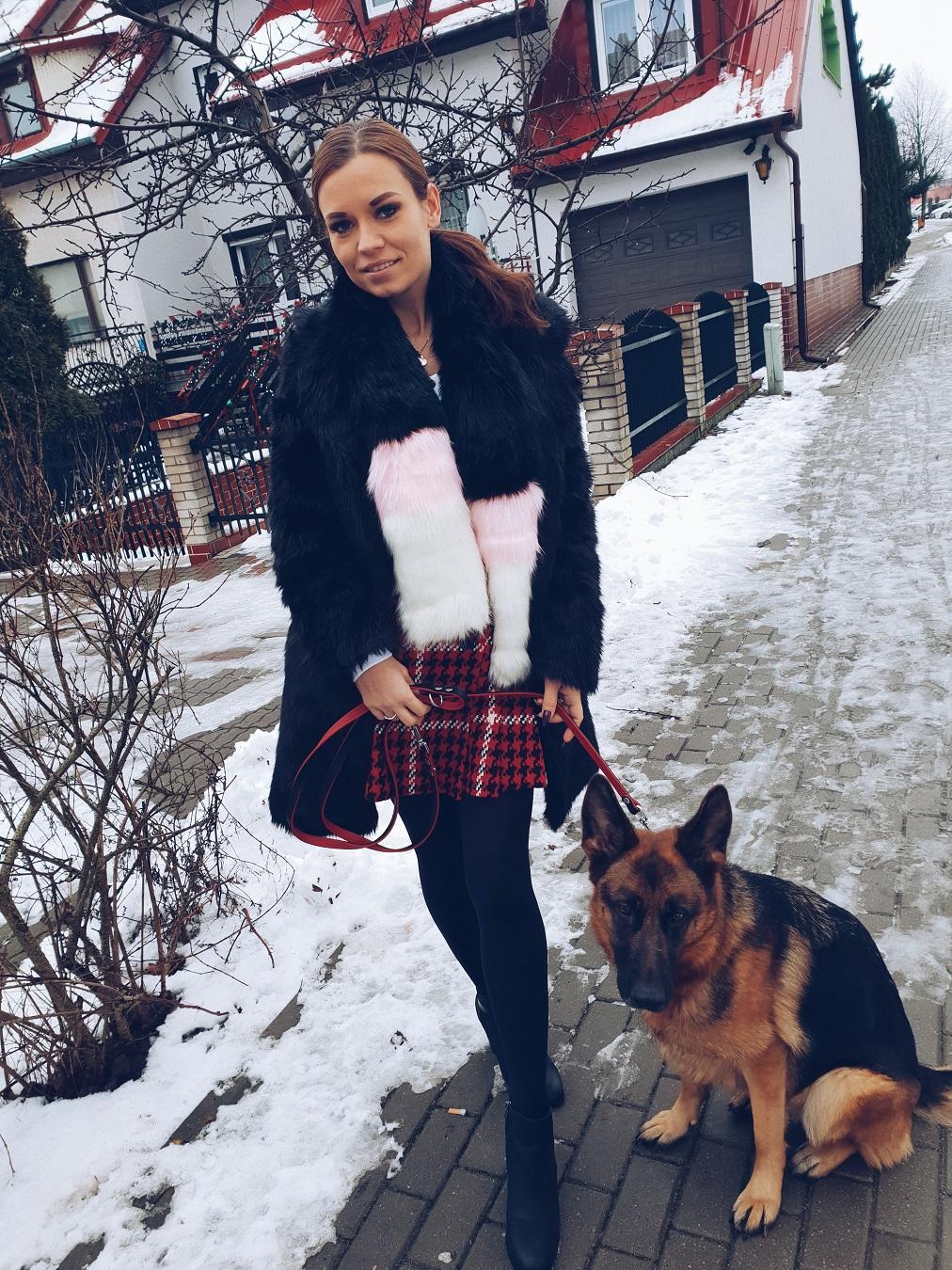 dog training and fashion